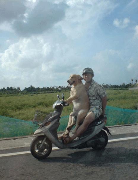 Dog-drives