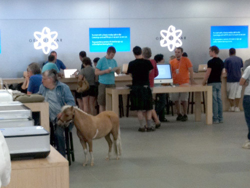 Horse_inside_apple_store
