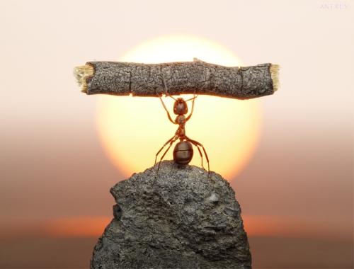 Super_ant